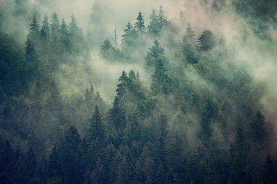 Фотообои Туманный пейзаж с еловым лесом в стиле винтаж ретро