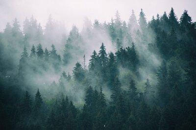 Фотообои Туманный пейзаж с еловым лесом в винтажном стиле ретро