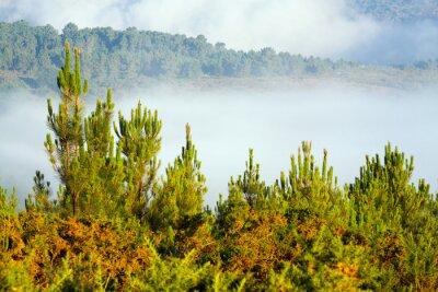 Фотообои Туманный пейзаж с сосновым лесом