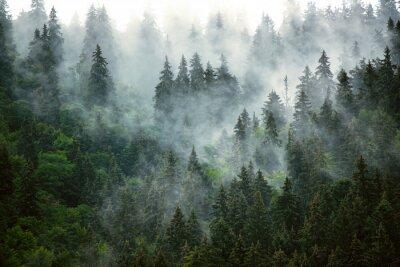 Фотообои Misty mountain landscape