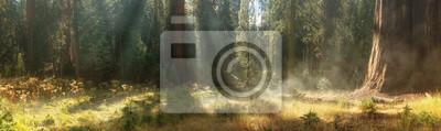 Фотообои Утро в Национальном парке Секвойя, США