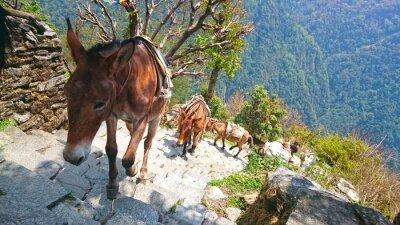 Фотообои горные ослов в непал