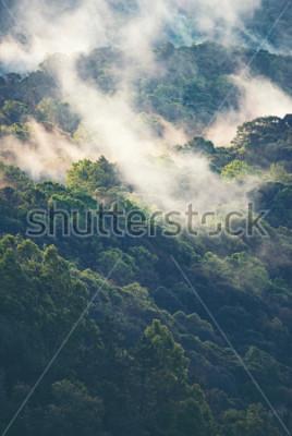 Фотообои Туманный лес в тропиках
