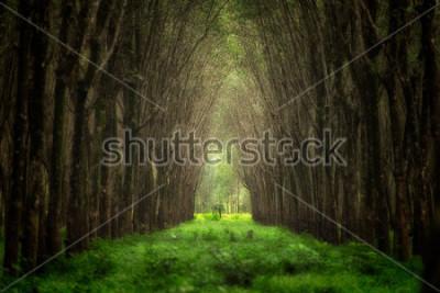 Фотообои Мнимый туннель дерева. Красивая природа лес фантазии.