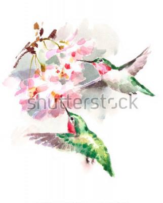 Фотообои Акварель Птицы Колибри Летающие вокруг вишневых цветов