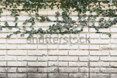 Фотообои Завод зеленой лианы, растущий на старой кирпичной стене