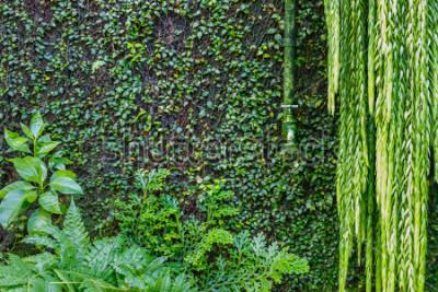 Фотообои Зеленый фоновый сад. Влажные зеленые растения