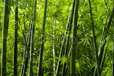 Фотообои Пейзаж из бамбукового дерева в тропических лесах, Малайзия