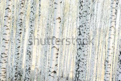 Фотообои береговой лес в солнечном свете утром