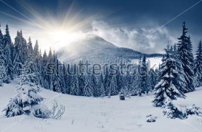 Фотообои Красивый зимний пейзаж с заснеженными деревьями