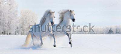 Фотообои Два белых скачущих валлийских пони на снежном поле