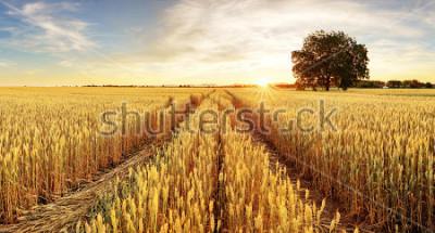 Фотообои Дерево и пшеничное поле
