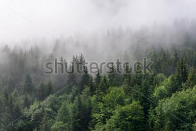 Фотообои Обзор вечнозеленого леса - верхушки высоких зеленых деревьев с густым туманом, въезжающим в пышную пустыню