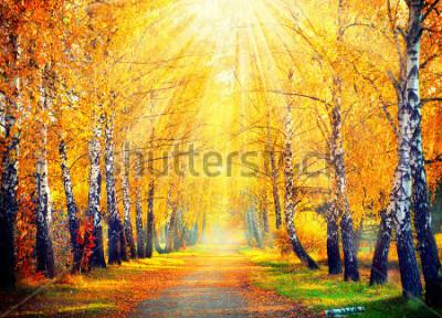 Фотообои Осень. Осень. Осенний парк. Осенние деревья и листья в солнечных лучах. Красивая осенняя сцена