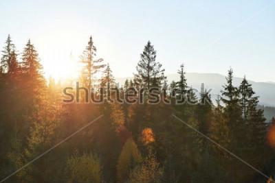 Фотообои Горный пейзаж осени с красочным лесом. Драматическая сцена утра, красные и желтые листья осени. Расположение места Карпаты, Украина, Европа.
