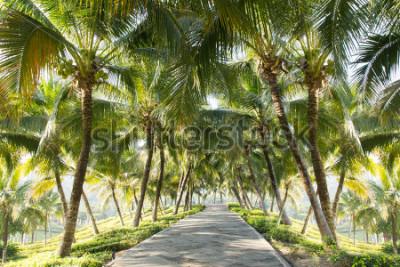 Фотообои Дорожка с кокосовой пальмой в саду