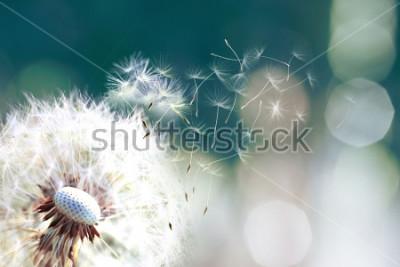 Фотообои Одуванчик. Закройте споры одуванчика, сносит, семена одуванчика в солнечном свете, сносит через свежий зеленый утренний фон