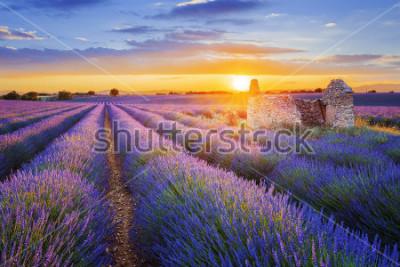 Фотообои Солнце садится над красивой пурпурной лавандой, поданной в Валансоле. Прованс, Франция