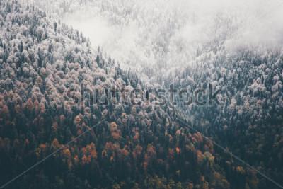 Фотообои Туманная осень Хвойный лес Пейзаж Аэрофотоснимок фон Путешествия безмятежный живописный вид
