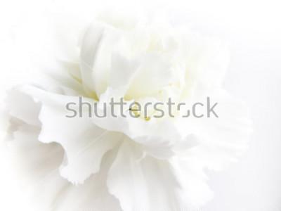 Фотообои White flowers background. Macro of white petals texture. Soft dreamy image