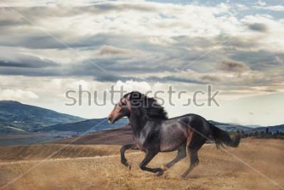 Фотообои Galloping horse