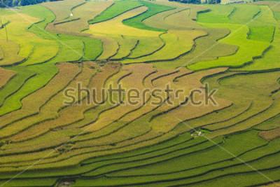 Фотообои MuCangChai,Terraced rice field in rice season in Mu Cang Chai, Vietnam