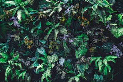 Фотообои Красивая природа фон вертикального сада с тропическими зелеными листьями