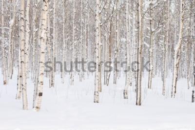 Фотообои Деревья в парке или в лесу зимой снег