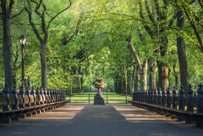 Фотообои Центральный парк. Изображение торгового центра в Центральном парке, Нью-Йорк, США