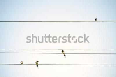 Фотообои Птицы сиськи сидят на проводах минималистичный весенний фон