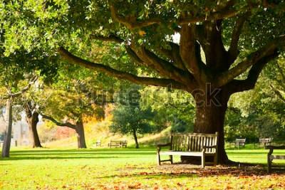 Фотообои Скамья под деревом в Королевском ботаническом саду в Лондоне