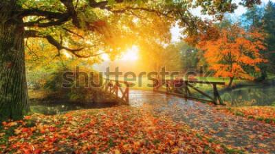 Фотообои Красивый осенний пейзаж в парке. Наружная фотография в свете восхода солнца