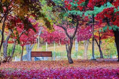 Фотообои Стенд в парке с много листьев дерева красного клена. Мирное место.