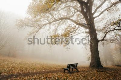 Фотообои Лес в осеннем настроении с туманом и солнцем