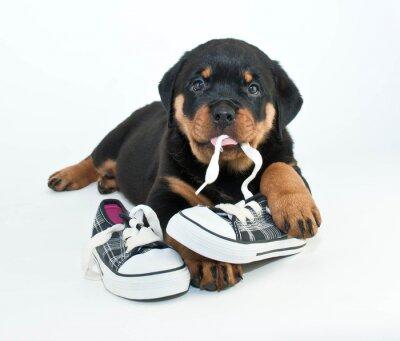 Фотообои Мои ботинки!