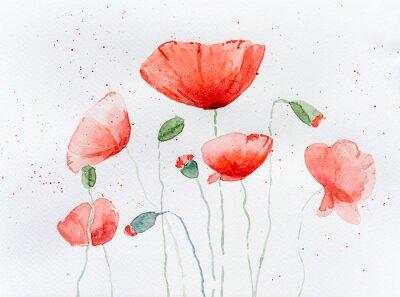Фотообои Natural drawing of poppy flowers