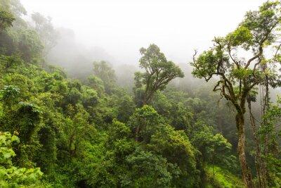 Фотообои Естественный лес на Magoebaskloof