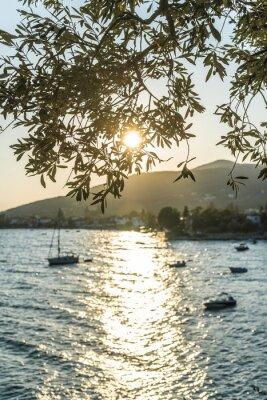 Фотообои Оливковые деревья, море и закат