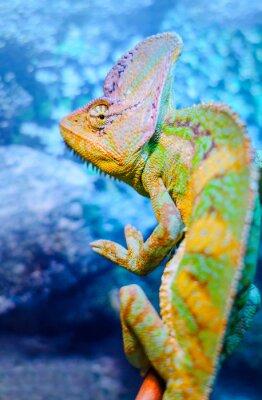 Фотообои Один зеленый хамелеон