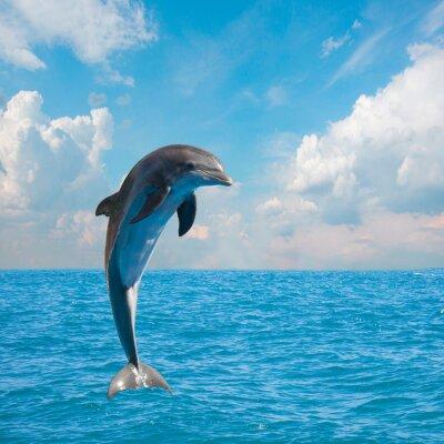 Фотообои один прыжки дельфинов