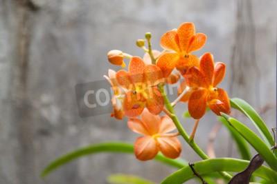 Фотообои Оранжевые цветы орхидеи
