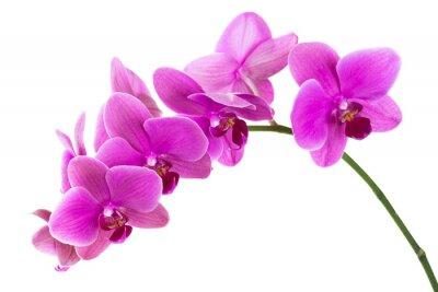 Фотообои Орхидея