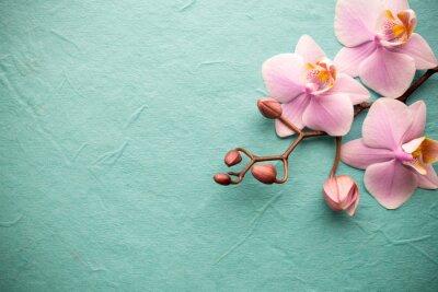 Фотообои Orchid.