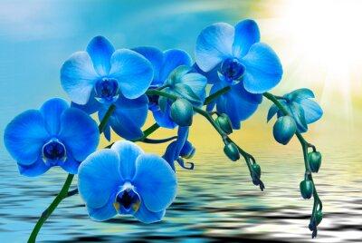 Фотообои Цветок орхидеи крупным планом