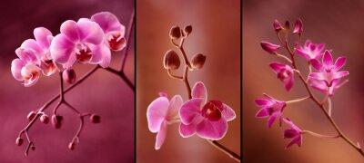 Фотообои ORCHIDEA tryptyk ж fioletach