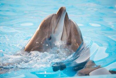 Фотообои пара дельфинов, танцующих в воде