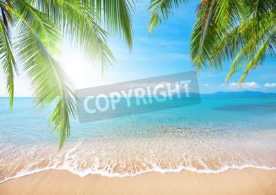 Фотообои Палм и тропический пляж