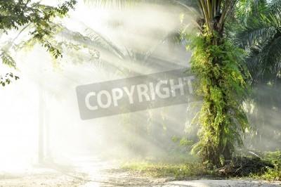 Фотообои Palm Fog Light Farm Day Outdoor