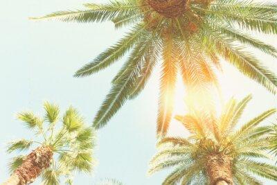 Фотообои пальмы и солнце