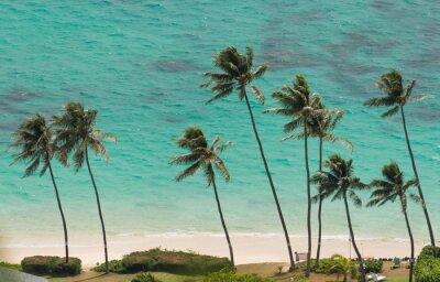Фотообои Пальмовые деревья на пляже Вайманало, Гавайи